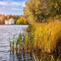 Баня для птиц :: Юлия Батурина