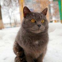 Интересно, а меня кто-нибудь пригласит в гости на Новый Год?:) :: Андрей Заломленков