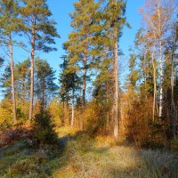 осенний лес :: linnud