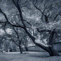 Снежно-денежное дерево :: Sergey-Nik-Melnik Fotosfera-Minsk