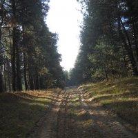 Погожим днём в лесу :: Галина