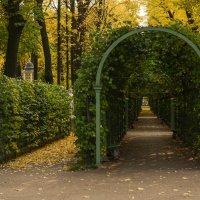 Осенний Летний сад :: Наталья Левина