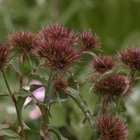 Необычные цветы :: gribushko грибушко Николай