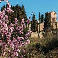 Сиена. Весна в Тоскане. :: Надежда Лаптева