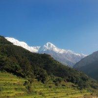 Гималайские зарисовки...Непал! :: Александр Вивчарик