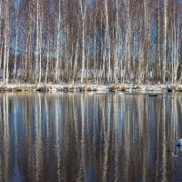 Озеро Светлое, Алтай :: Алина Меркурьева