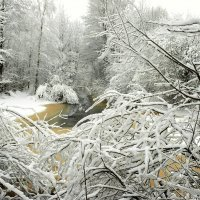 река Воймега :: НАТАЛЬЯ
