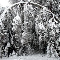 Сказки  энского леса :: олег свирский