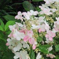 Бело-розовые цветы :: Дмитрий Никитин