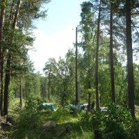Палатки в лесу :: Вера Щукина
