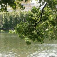 И было лето... :: Алёна Савина