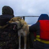 Трое в лодке не считая собаки :: Александр Смирнов