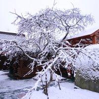 Зима 2 :: Алексей Цветков