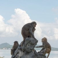 В окрестностях Нячанга. Северные острова. Остров Обезьян. :: Виктор Куприянов