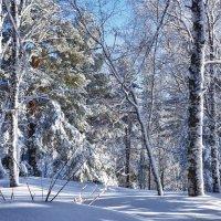 Лес на г.Церковка :: Светлана Игнатьева