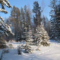 в лесу :: Ольга