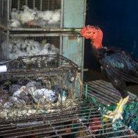 На птичьем рынке в Нячанге :: Виктор Куприянов