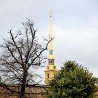 Осень в Питере :: Андрей Щукин