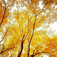 Осень-огонь :: Elena Belova (e.lova)