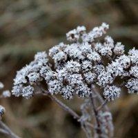 Зимний хрусталь.. :: Антонина Гугаева