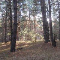 Утро в лесу :: Галина