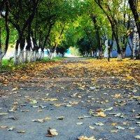 Осень :: Natalia