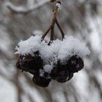 Зимнее настроение :: Регина Пупач