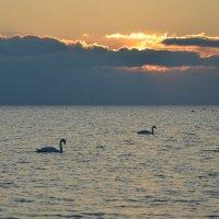 Лебединый закат :: Александр Довгий