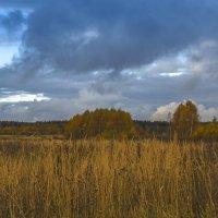 Осенние травы :: Сергей Цветков