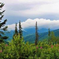 Облачное боа для гор :: Сергей Чиняев