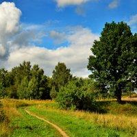 По дороге в деревню. :: Aleksandr Ivanov67 Иванов