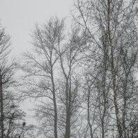 природа :: Геннадий Свистов