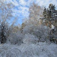 Зима в лесу :: Galaelina ***