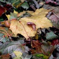 Осенние листья :: Лидия Суюрова