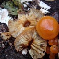 О грибах в зимнее время :: Нина Корешкова