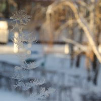 Рисунок Деда Мороза :: Мария Ларионова
