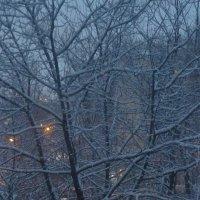 Снежное утро :: Татьяна Юрасова