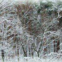 За окном (Ода снегу) :: Надежда Бахолдина