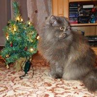 У Китти тоже есть елочка... С наступающим Новым годом!!! :: Galina Dzubina