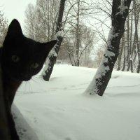 черный кот :: Татьяна