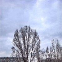 Пасмурный день декабря :: Нина Корешкова