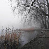 Утро туманное, утро морозное... :: Маргарита Батырева
