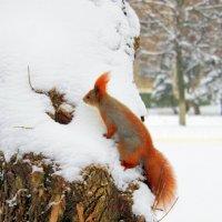 Рыженькая шубка и пушистый хвост. :: Валентина ツ ღ✿ღ