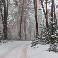 Прислушиваясь к шороху снежинок... :: Лесо-Вед (Баранов)