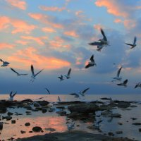 Чайки на закате. :: Александр Гризодуб