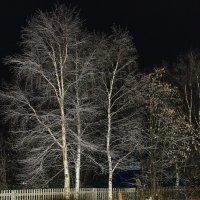 На фоне ночного неба :: Владимир Волосовский