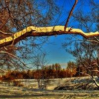 Мороз и солнце... :: олег свирский