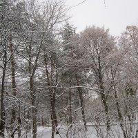 Зимняя сказка :: Дмитрий Никитин