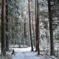 Лес в ноябре. :: Наталья