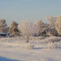 Морозно... :: Елена Ярова